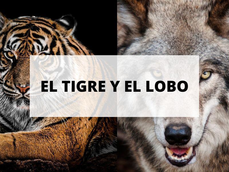 cuento-tigre-lobo